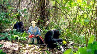 Andy's Wild Adventures - Series 2 - Chimpanzees