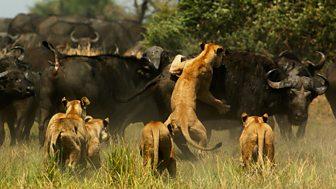 Nature's Microworlds - 2. Serengeti