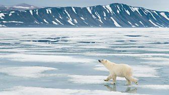 Nature's Microworlds - 6. Svalbard