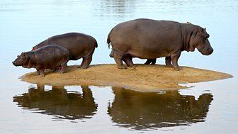 Natural World - 2000-2001: 1. Hippo Beach