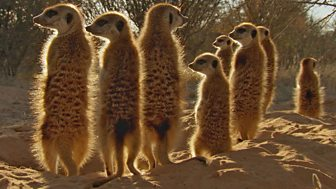 Africa - 1. Kalahari