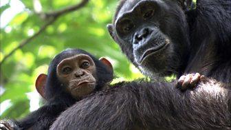 Africa - 3. Congo