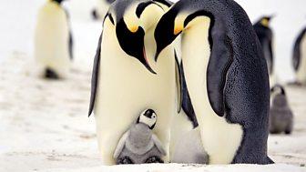 Penguins - Spy In The Huddle - First Steps