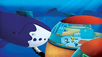 Octonauts - Series 2 - Bowhead Whales