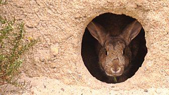 The Burrowers: Animals Underground - Episode 1