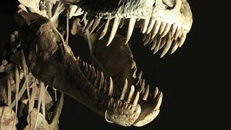 Horizon - 2013-2014: 4. Dinosaurs: The Hunt For Life