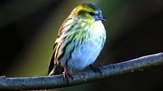 A Guide to Woodland Birds
