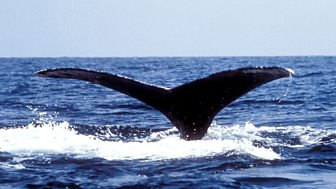 Philip Hoare's Guide to Whales