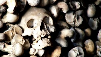 Elspeth Davie - A Collection of Bones