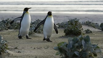 Pioneers and Penguins: Life in the Falklands