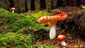 Fairy Tales Retold by Sara Maitland