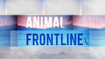 Animal Frontline