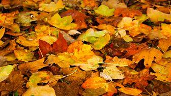 Autumn 1973