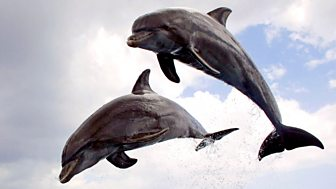 Dolphins - Spy in the Pod