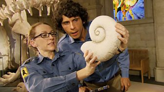 Andy's Dinosaur Adventures - Eustreptospondylus And Ammonite