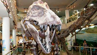 Fossil Wonderlands: Nature's Hidden Treasures - Feathered Dinosaurs