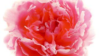 Rhs Chelsea Flower Show - 2018: Episode 4