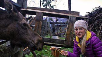 Naomi's Nightmares Of Nature - Series 2 - Alaska