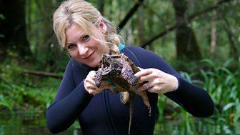 Naomi's Nightmares Of Nature - Series 2 - Florida