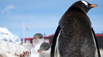 Natural World - 2014-2015 - Penguin Post Office