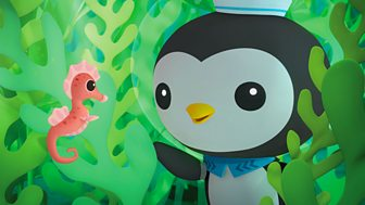 Octonauts - Series 1 - The Seahorse Tale