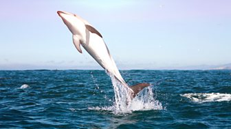 The Wonder Of Animals - Dolphins