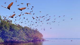 The Wonder Of Animals - Bats