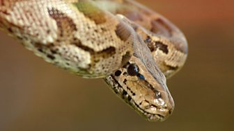 The Wonder Of Animals - Snakes