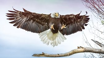 The Wonder Of Animals - 12. Birds Of Prey