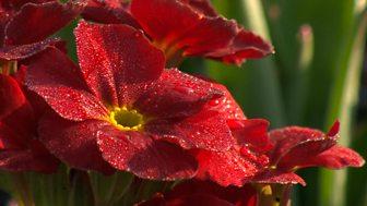 Gardeners' World - 2015: Episode 4