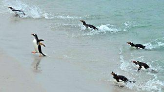 An Island Parish - Series 9 - Falklands: 2. West Is Best