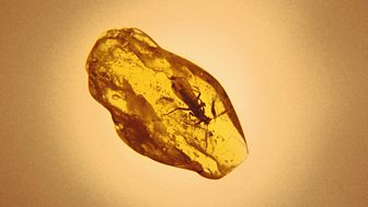 Mark Gatiss - The Devil in Amber