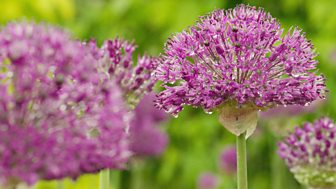 Gardeners' World - 2015: Episode 11