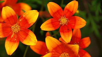 Gardeners' World - 2015: Episode 22