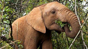 This Wild Life - 3. Elephant Sos