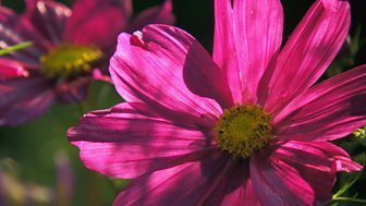 Gardeners' World - 2015: Episode 24