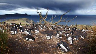 Patagonia: Earth's Secret Paradise - 3. Life On The Edge