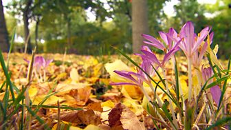 Gardeners' World - 2015: Episode 31