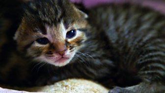 Meet The Kittens - Episode 2