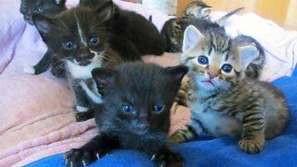 Meet The Kittens - Episode 3
