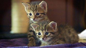 Meet The Kittens - Episode 4