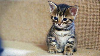 Meet The Kittens - Episode 5