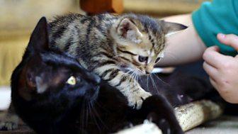 Meet The Kittens - Episode 7