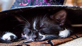 Meet The Kittens - Episode 8