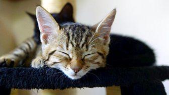 Meet The Kittens - Episode 10