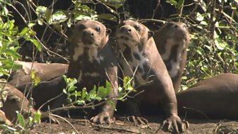 Natural World - 2007-2008: 2. Raising Sancho
