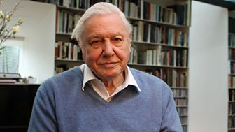 David Attenborough's Natural Curiosities - Series 1 Shorts: 13. Spinners And Weavers
