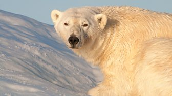 Earth's Greatest Spectacles - 2. Svalbard