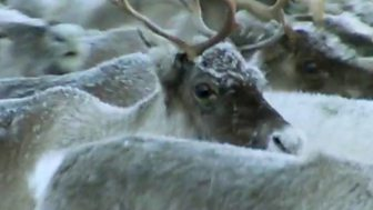 Natural World - 2007-2008: 13. Reindeer Girls