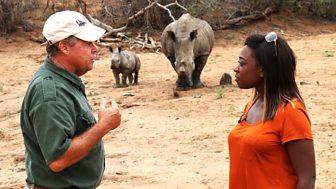 Newsround Specials - Defending The Rhino